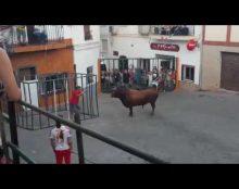 [Video] Un toro rompe una jaula y embiste brutalmente a un hombre que estaba dentro